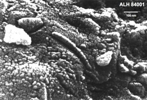 The Mars rock with the bugs -- a scanning electron microscope image of alleged fossil bacteria in a martian meteorite.  These features are extremely small (note scale, in nanometers, i.e., billionth of a meter).